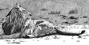 60252-lion_Mara