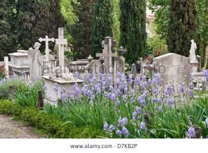 the-english-cemetery-florence-italy-sweet-iris-iris-pallida-or-dalmatian-D7KB2P