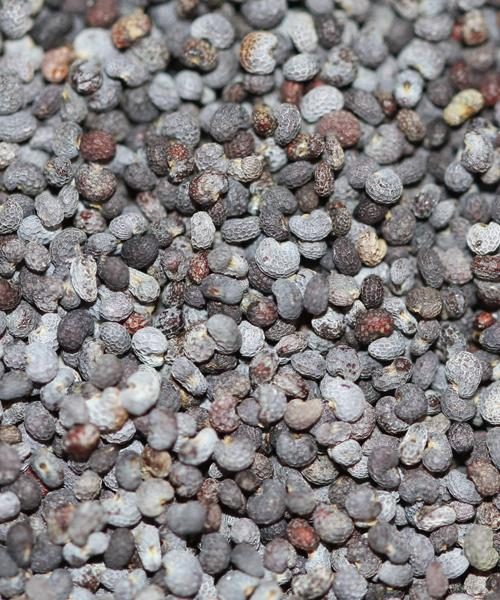 poppy-seeds-1699